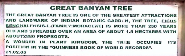 Banyan-Tree_world_record